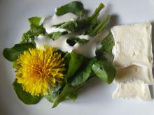 Brie sajt, pongyola pitypang levele salátaöntettel
