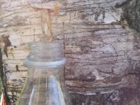 Hogyan fakasszunk a nyírfából vizet